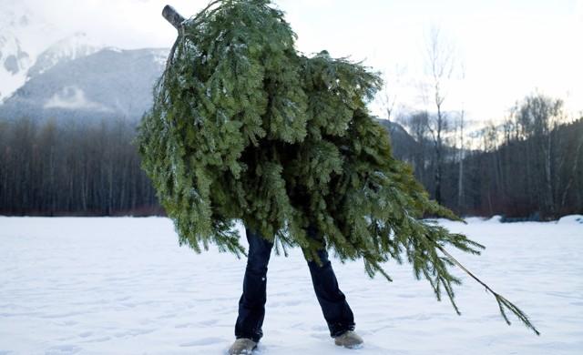 tree-carry-e1463845956453